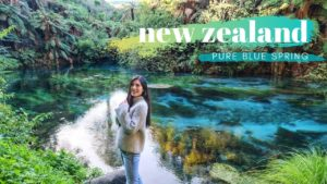 pristine blue spring cambridge in waikato new zealand north island nz travel vlog 1 5